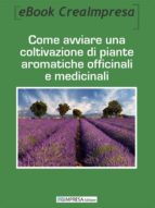 business plan coltivazione lavanda